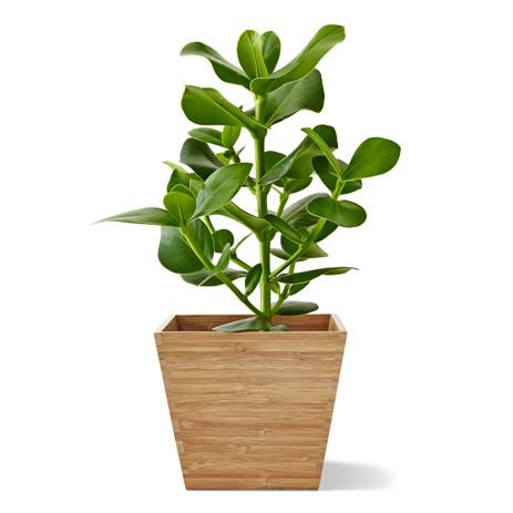 Растения, кашпо и подставки