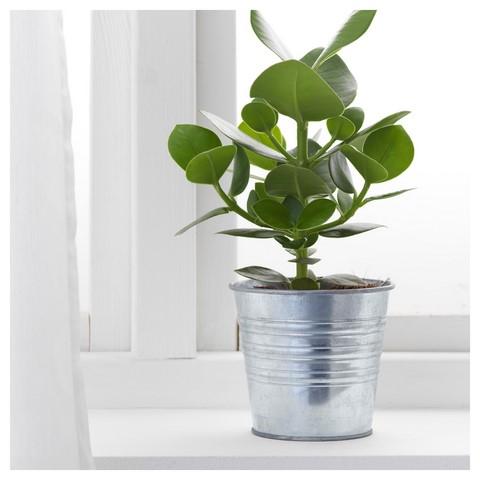 Кашпо и растения
